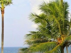 The Rocky and Cliffed Beach of Varkala and Trivandrum in Kerala