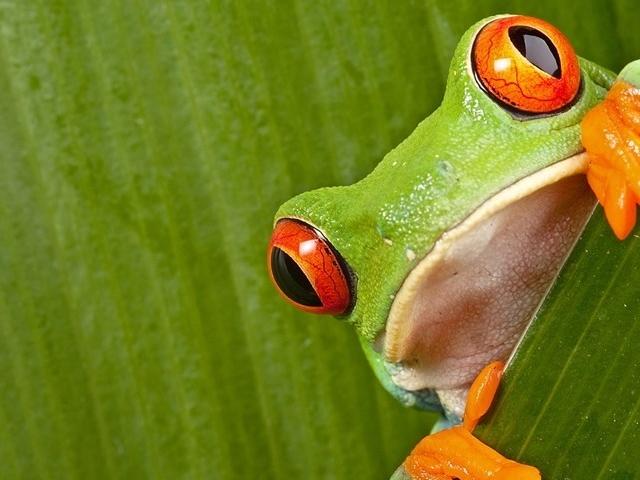 Mombacho Rainforest Secrets Photos