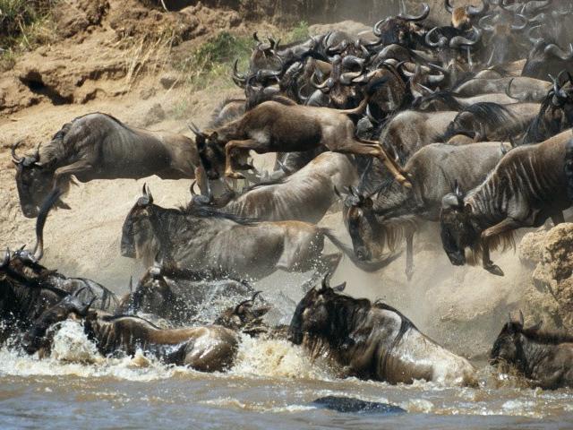 Maasai Mara and Lake Nakuru Adventure Tour Photos