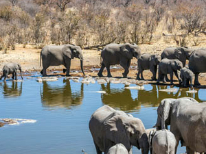 Etosha Experience 11 Days Safari Photos