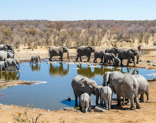 Etosha Experience 11 Days Safari Photos