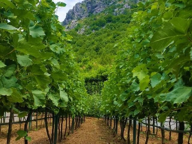 Wine & Dine Tour in Montenegro - Full Day Visit Photos