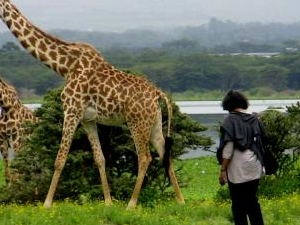 Kenya Safari and Mombasa Beach Holidays