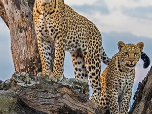 Tanzania and Kenya Camping Safari Fotos