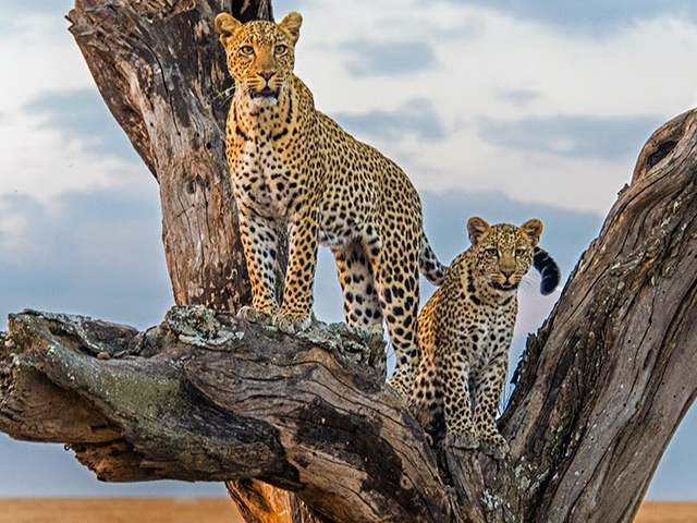 Tanzania and Kenya Camping Safari Photos