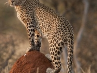African Adventure Namibia