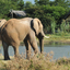 Elephants Ner Lodge