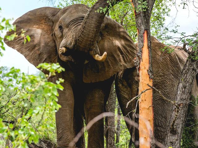 Sefapane Lodge, Greater Kruger Region Photos