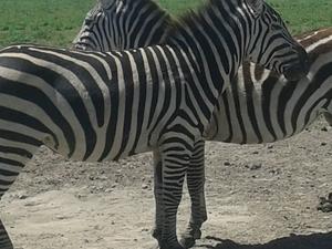 14 Days / 13 Nights - Tanzania Safari Photos