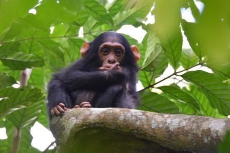 Classic Uganda Wldlife Safari Experience Photos