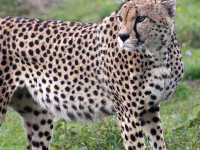 6-day Game Safari in Northern Tanzania Photos