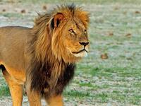 10 Days Namibian Family Adventure Safari - Accommodated