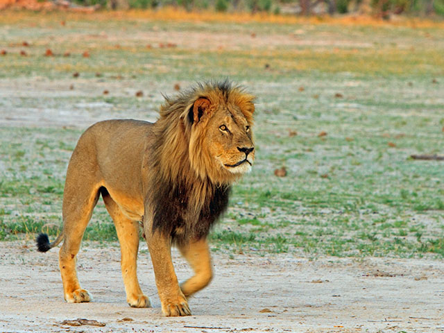 10 Days Namibian Family Adventure Safari (Accommodated ) Photos