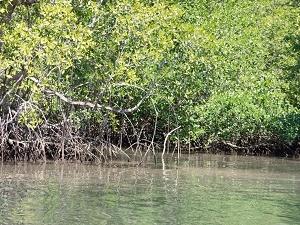 NativosCorcovado-TerrabaSierpe- Mangroves Tour. Photos