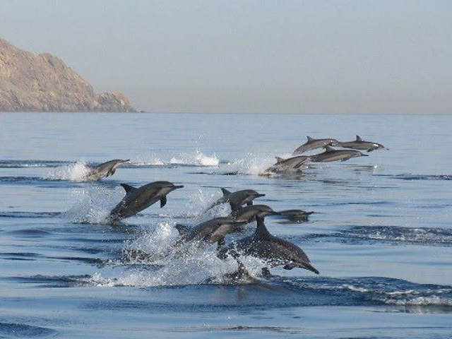Dolphin watching +Snorkeling Combined tour Photos