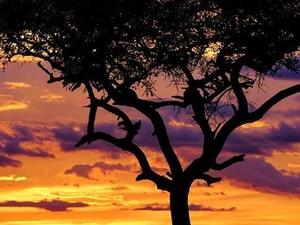3 Days 2 Nights Masai Mara Photos