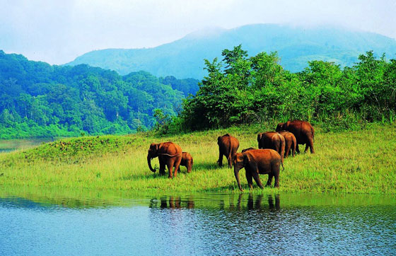 4 Night 5 Days 3 Star Package For KERALA - GODS OWN COUNTRY Photos