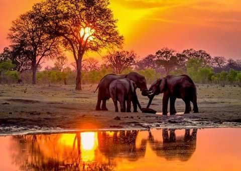 Safari 3 Countries, 3 National Parks & The Indian Ocean Photos