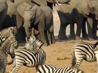 Tours And Safaris