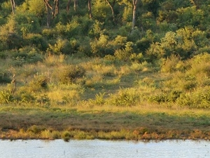 1 Day Trip to Hwange National Park - Full Day Photos