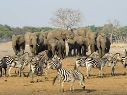 Victoria Falls And Hwange National Park Package Photos