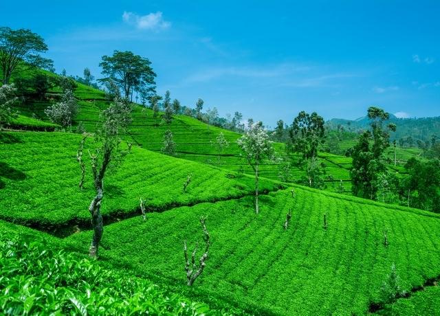 Sri Lanka 5 Day Privet Tour Photos