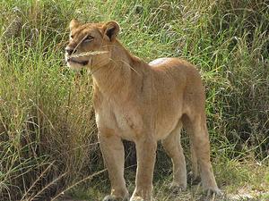 10 - Days Uganda Safari Photos