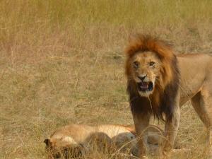 7 Days Masai Mara And Mombasa Safari - Bush And Beach Photos
