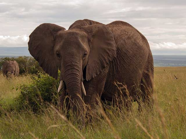 8 Days Superb Tanzania & Kenya Tour Photos