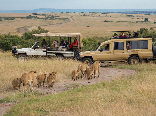 6 Day Safari in Masai Mara and Amboseli Photos