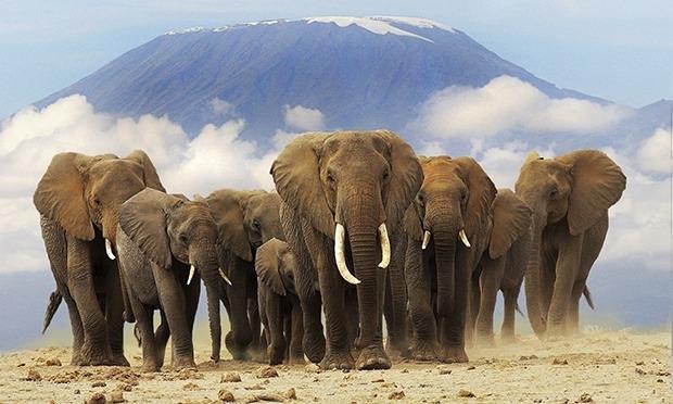 8 Days-Amboseli-Lake Naivasha-Lake Bogoria-Lake Nakuru-Masai Mara Photos