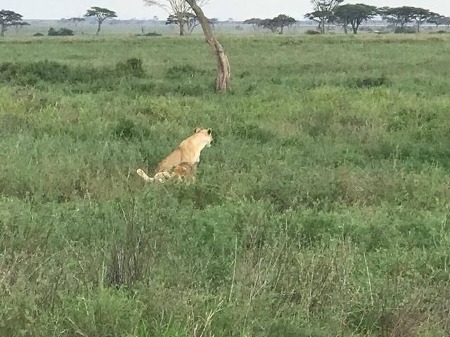 Tanzania Package for Safari and Zanzibar Holidays 10 Night 11 Days Photos