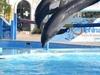 Dolphin Show Sharm El-sheikh