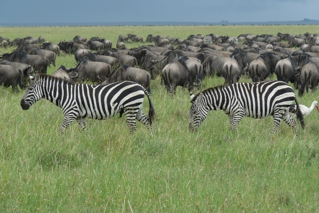 Day Trip to The Ngorongoro crater Photos