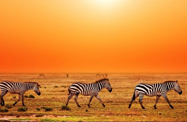 5 Days Tanzania Safari Photos