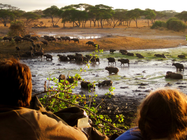 9 Days Tanzania Safari Photos