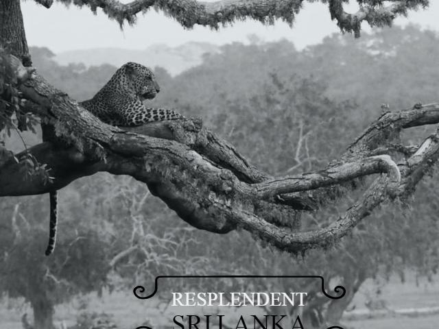 Resplendent Srilanka Photos