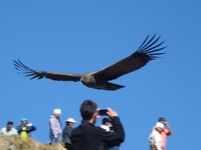 Back Packer Colca Canyon Trekking 2D/1N (Oasis SANGALLE) Photos