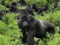7 Days Primate safari