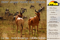 Right Safaris
