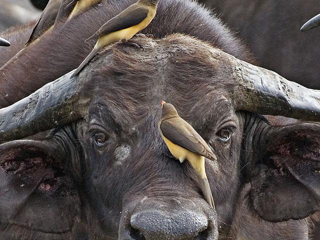3 Days Masai Mara Game Reserve Camping Safari Photos