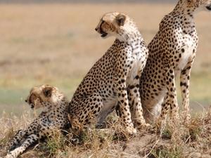 10 Days Serengeti Safari Fotos
