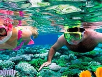 Snorkeling At Gufton Island 3