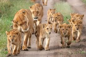 Seven Days Wildlife Uganda Photos