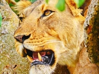 Murchison Falls National Park tour