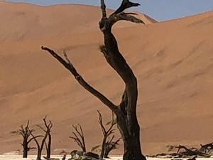 3 Day Namib Desert Tour Photos