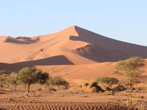 Namibia Safari Photos
