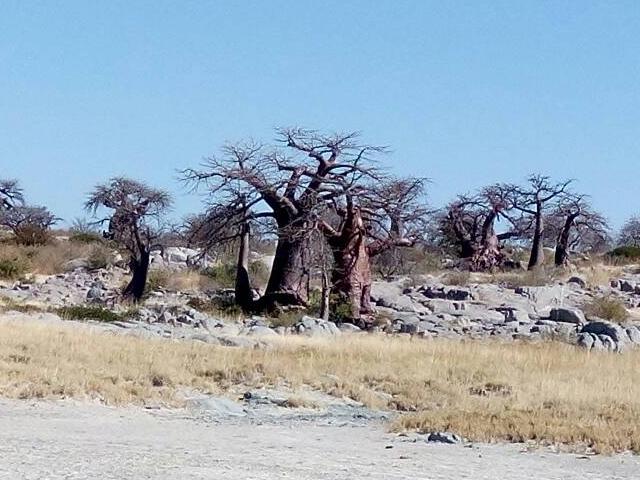 Kalahari Makagadikgadi Travel Photos