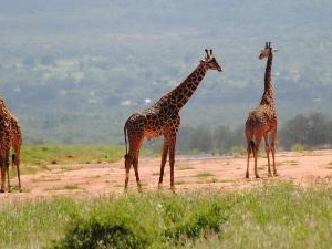 Lake Naivasha, Crescent Island and Hell's Gate Day Tour Fotos