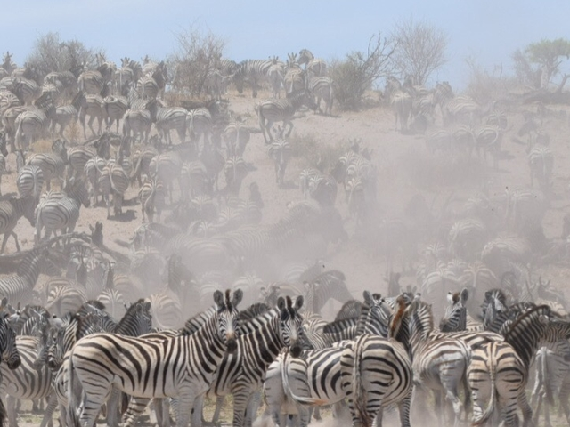 Zebra Migration day trip Makgadikgadi National Park Photos